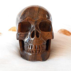 Tijgerijzer schedel 11 cm 1270 gram.